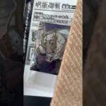 【呪術廻戦0公開前】#8 呪術廻戦デフォルメシールウエハース
